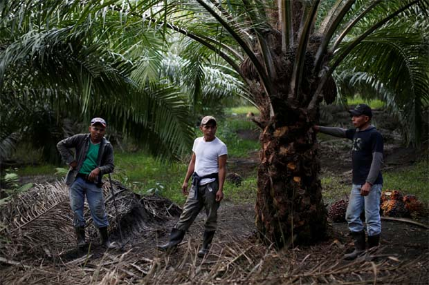 Malaysian palm oil price rises with edible oils on hopes of US-China