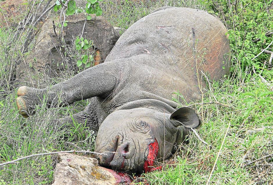 This black rhino was killed for its horn at the Lewa Conservancy in northern Kenya. Photo: AFP