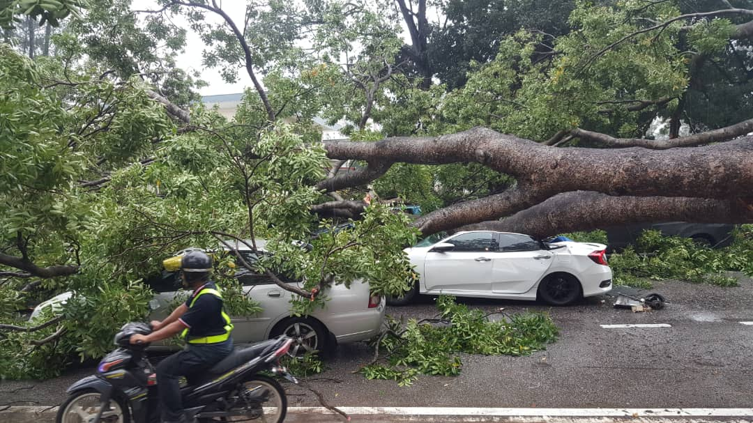 The roof of the white Honda Civic was completely crushed by the tree, making it difficult for volunteers to free the trapped driver.