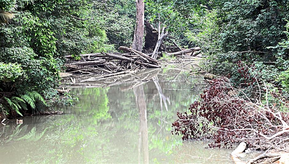 Endangering wildlife: Debris from the logging activity clogging up a river at the Lesong permanent reserve forest.