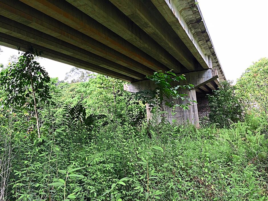 Path for wildlife: To lessen the impact of roads on forests and wildlife movements, viaducts are being built as they provide a corridor beneath which links up spliced forest. This viaduct is at the Aring-Tasik Kenyir road in Terengganu. - TAN CHENG LI/The Star