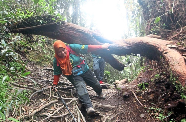 A hiker ducks under an obstacle along the trail.