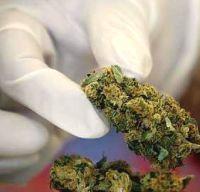 sf_07cannabis
