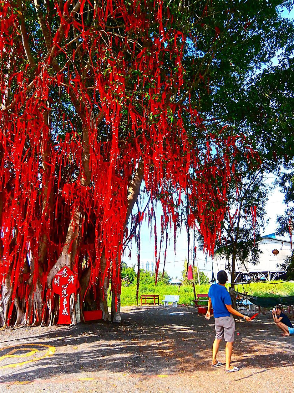 A man throwing his wish ribbon towards the branches of the Wishing Tree in Pantai Redang, Sekinchan.
