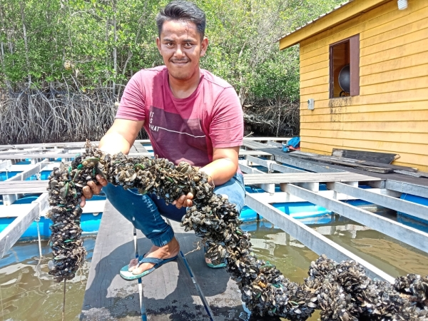 A boatman pulling up fresh mussels from a shellfish farm in Sungai Sepang. Visitors can buy these at RM7 per kg and arrange for the shellfish to be cooked by boat operators.