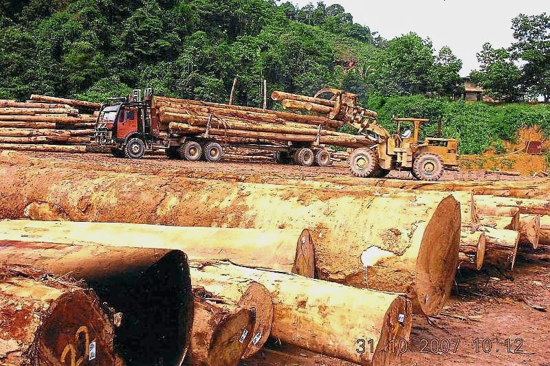 Ta Ann upbeat on future prospects of logging business | The Star Online