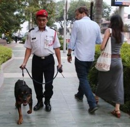 Active presence: A Rottweiler being taken around by his handler during patrolling hours outside the Bangsar Shopping Centre.