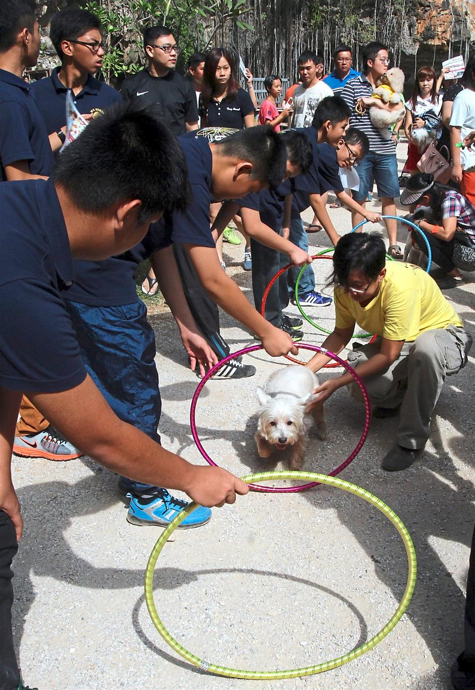 ipapets230815 3... A pet owner (in yellow, right) guiding its dog to jump through the hoops in the Hula Hoop Jumping category during the ISPCA Pets Sports Day at Qing Xin Ling Leisure and Cultural Village in Taman Saikat on Aug 23.