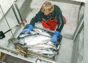 p5fish
