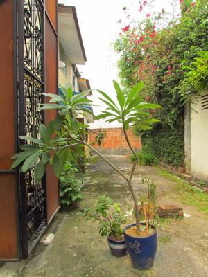 Hidden beauty: This looks like someoneu2019s lovingly tended garden, doesnu2019t it? Itu2019s not; itu2019s a communityu2019s lovingly tended back lane. Greenery makes all the difference in this alley near Jalan Kurau in Bangsar, KL.