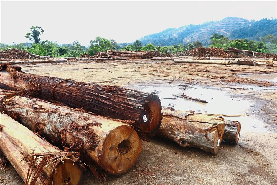 Leftover logs at the logging depot at the Bukit Enggang catchment area.