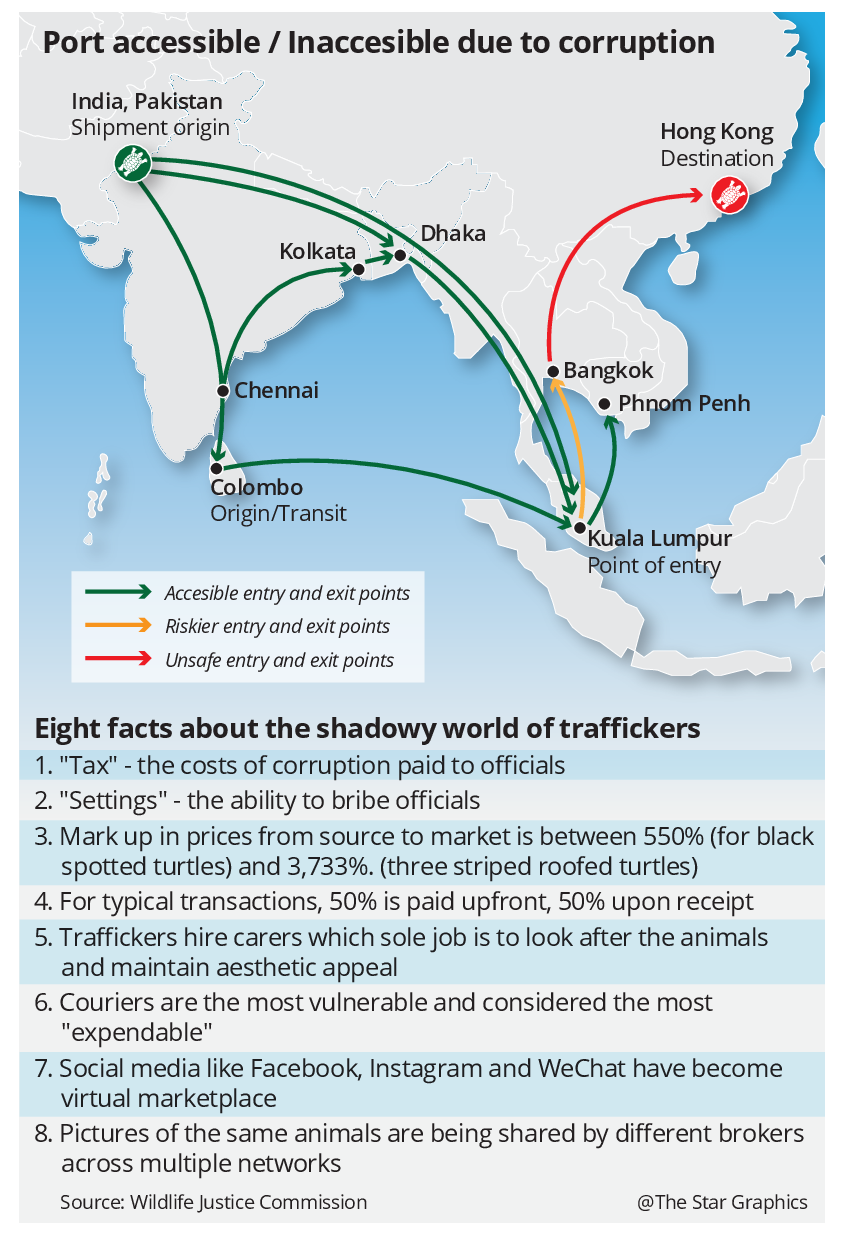 M'sia linked to wildlife trafficking network | The Star Online