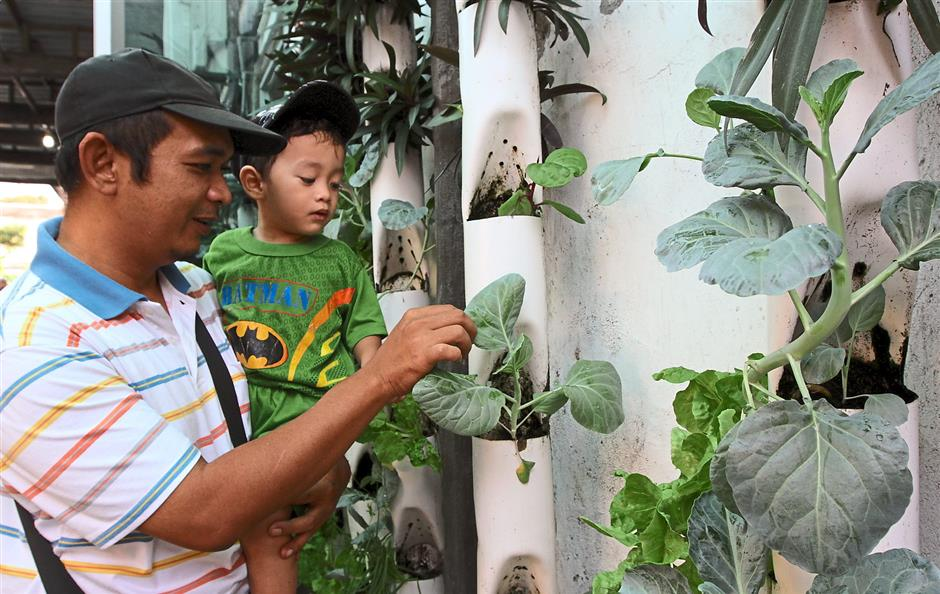 Check it out: Mohd Radzi, 43, and his son Mohd Ridhzwan, 2, inspecting another method of vertical farming at the event.