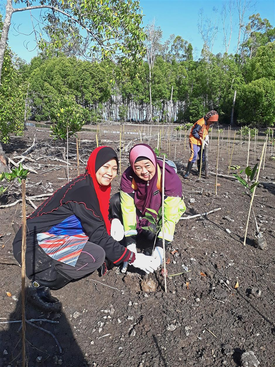 Volunteers planting mangrove seedlings at a degraded mangrove area at the Lekir Forest Reserve in Sitiawan.