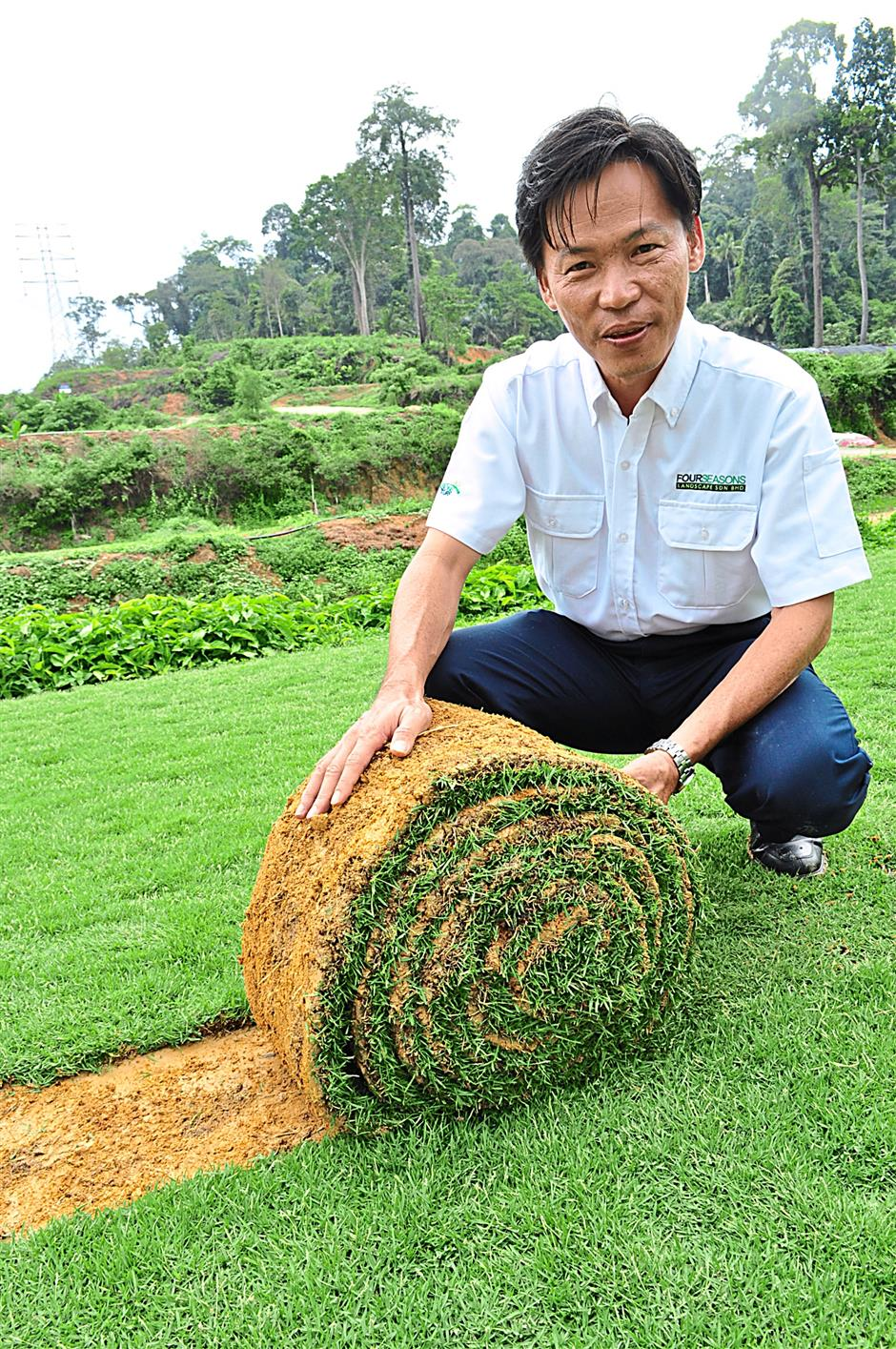 It's harvest time! Lun shows off a zoysia 'swiss roll' ready to be laid