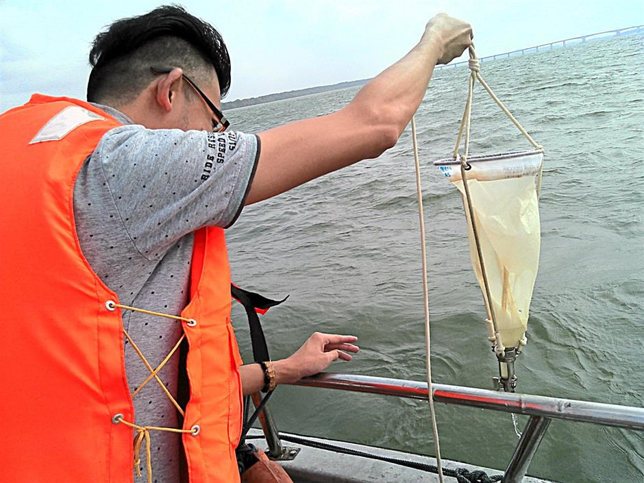 Water sampling in the Straits of Johor confirmed a bloom of the microalgae Karlodinium australe during the fish kills in Tanjung Kupang, Johor.