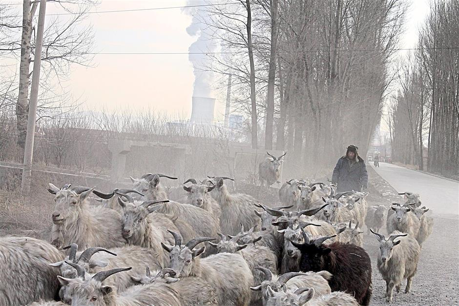 Changing landscape: Some grazing lands have been lost to coal development in Inner Mongolia in China. This herder has found forage for his goats in the patches of vegetation sandwiched between this coal plant and a nearby open-pit mine. - MCT photos