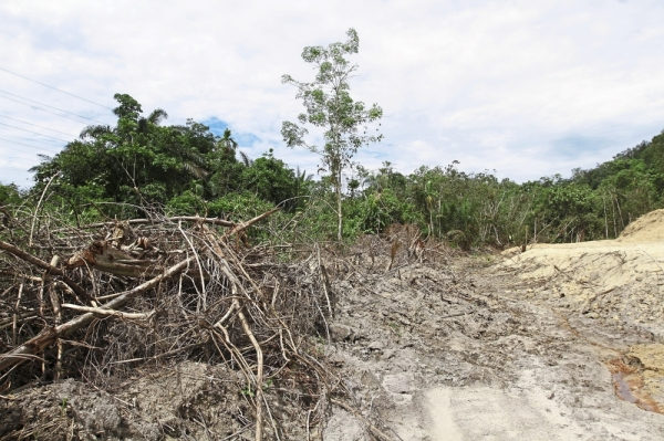 Stripped bare: What used to be a jungle has now been reduced to an open sandy wasteland after the area was cleared to make way for logging on top of the hill near Mengkuang Dam in Sungai Lembu, Bukit Mertajam.