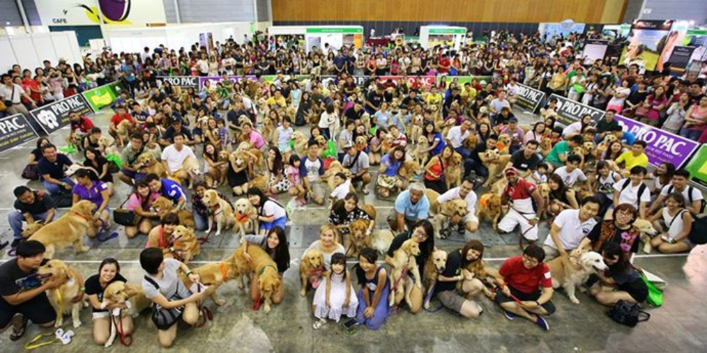 Are you seeing gold? Well more to the point golden retrievers. Photo: Pet Expo