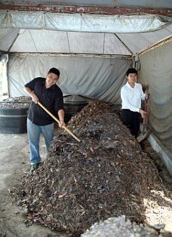 Ecowarriors: Ng Chee Guan (left) and Jaron Keng are the brains behind the food waste composting project at Universiti Malaya. In the Takakura composting method, organic waste is heaped into piles which are turned daily to encourage aerobic decomposition.