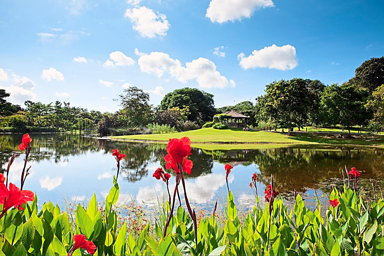 The Eco-Lake in the Singapore Botanical Gardens. - Photo from TripAdvisor