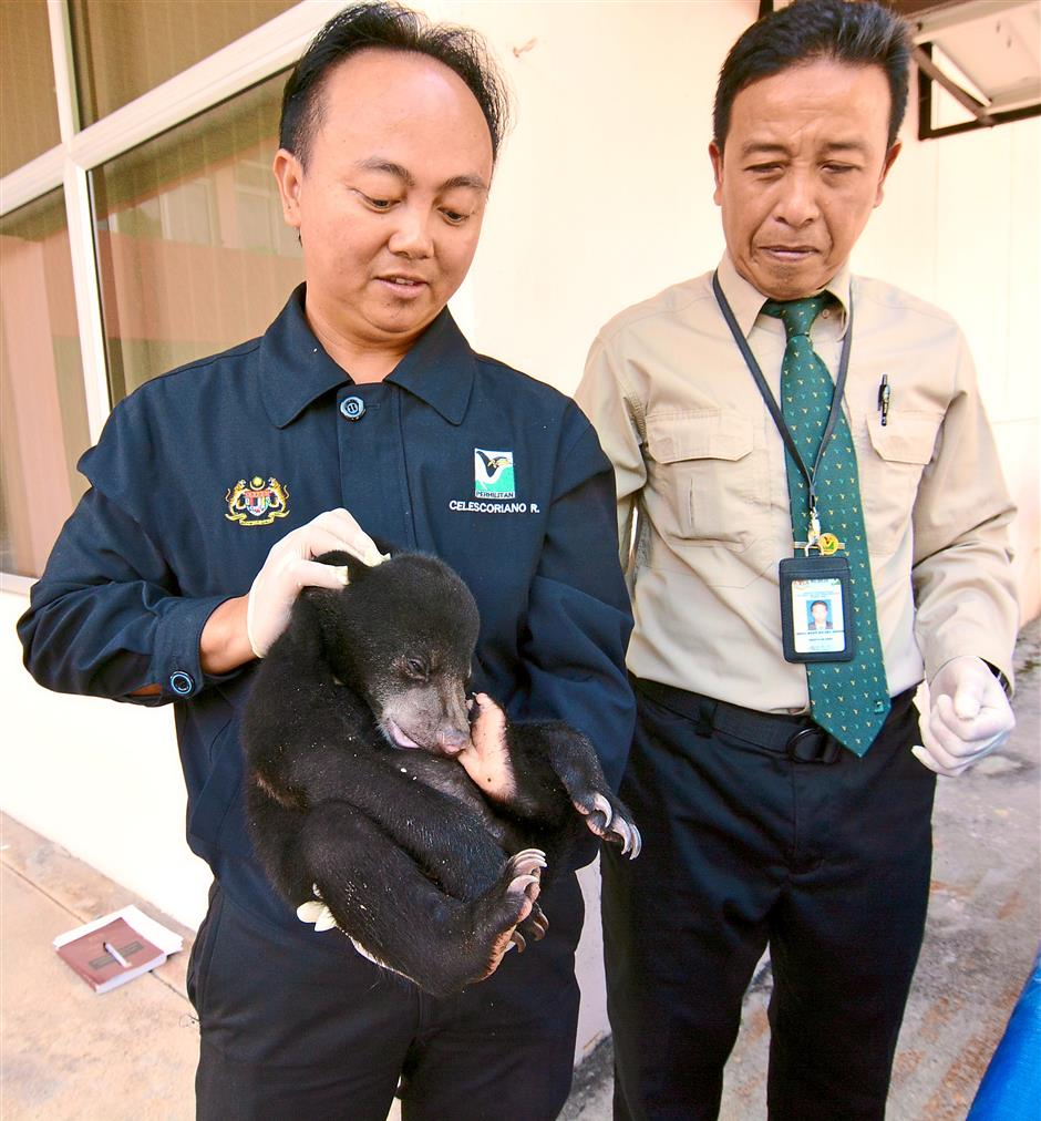 Un-bear-able situation: Abdul Kadir (right) looking on as wildlife deputy enforcement director Celescoriano Razond holds up a bear cub that was found during 'Operasi Taring'. — P. NATHAN / The Star