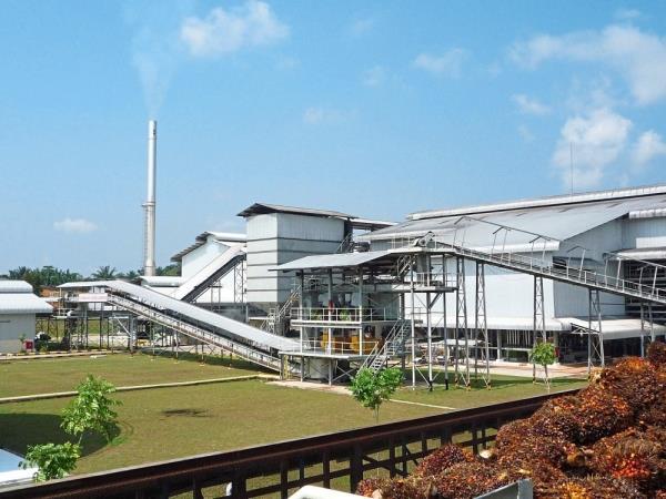 Hap Seng remains positive on plantation business | The Star Online