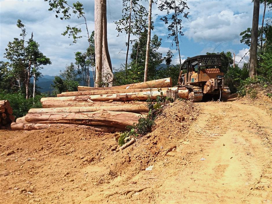 Logs seen stacked near a logging site near the Pos Kemar orang asli settlement in Gerik.