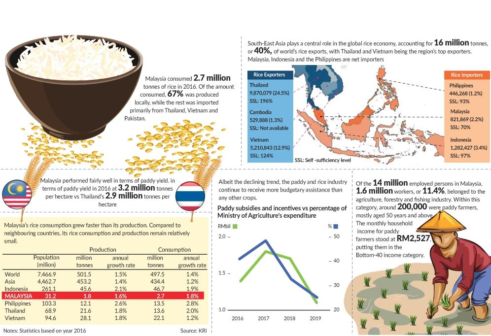 Where Does Malaysia S Paddy And Rice Industry Stand The Star
