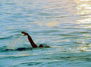 malik_swim
