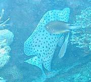 p2fish