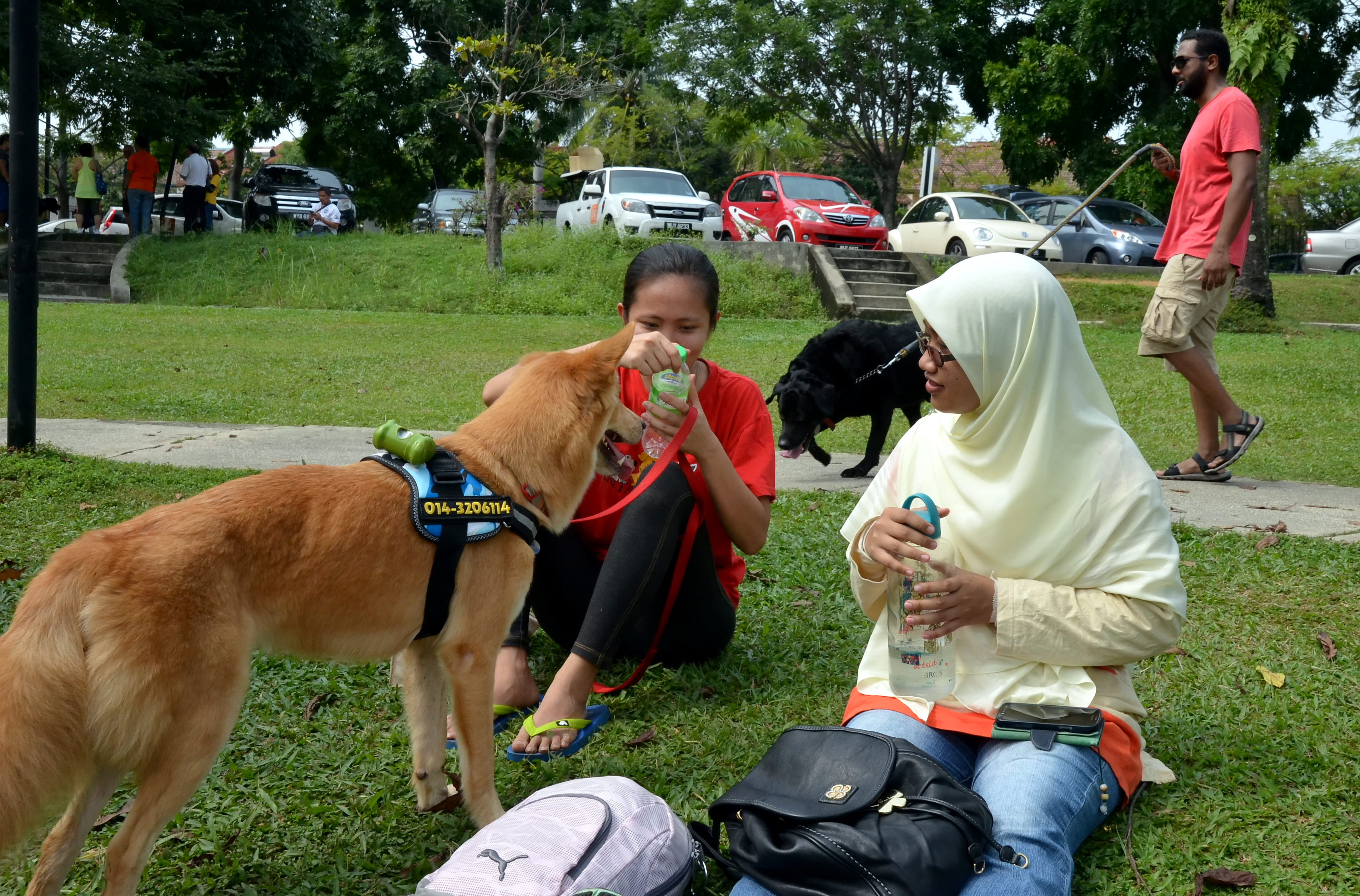 Jakim To Conduct Probe On I Want To Touch A Dog Event The Star