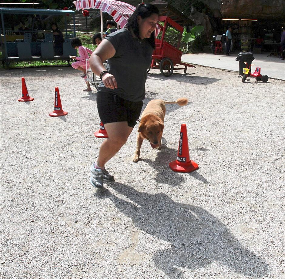 A pet owner bringing her dog to run in an S shape around the cones.