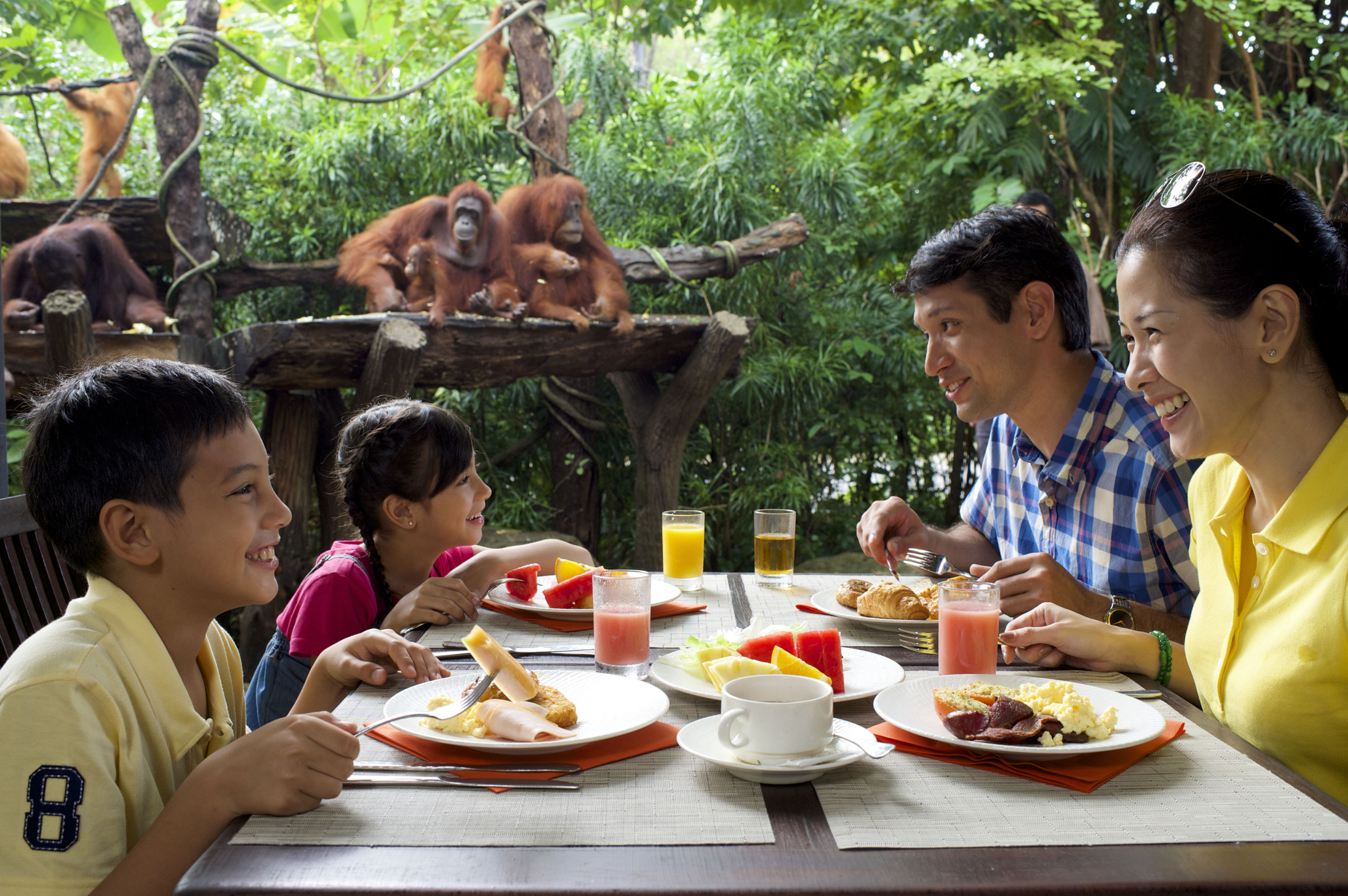 Have breakfast with the orang utans. Photo: Alex Soh/Singapore Zoo