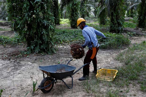 India raises base import price of crude palm oil by US$5/T | The