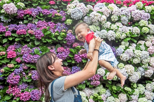 A smiling face amid a sea of flowers at Miaoli Flower Dew Leisure Farm.