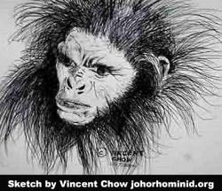 Bigfoot sketches cause a buzz | The Star Online