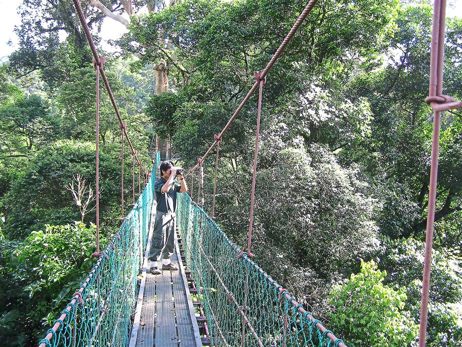 The 260m-long canopy walkway near the Borneo Rainforest Lodge in the Danum Valley Conservation Area is a hit among visitors. Studies show that rainforest canopy supports a significant proportion of total biodiversity and it is sensitive to disturbance by logging and severe drought.