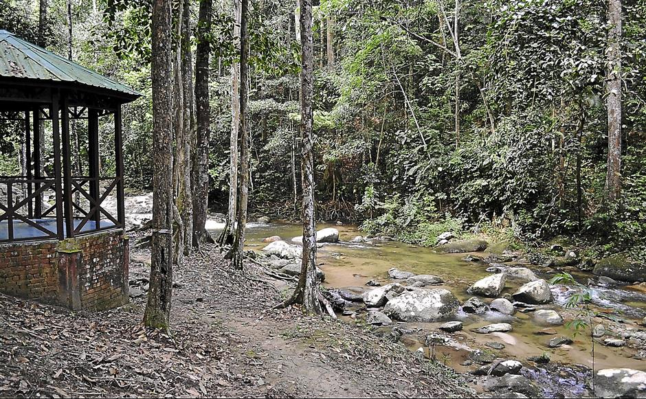 The pristine Hutan Lipur Lata Kekabu, which is 10km away from Lenggong town.