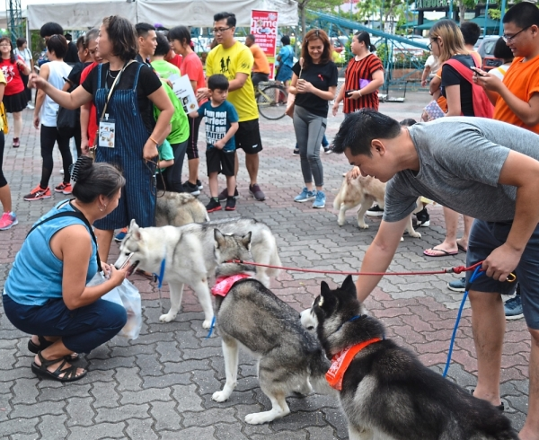Dog owners showing off their pets during the Charity Fitness Dance and Bazaar organised by SPCA Seberang Prai and Move U Dance & Fitness Factory at Juru Auto-City.
