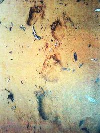 Bigfoot prints out | The Star Online