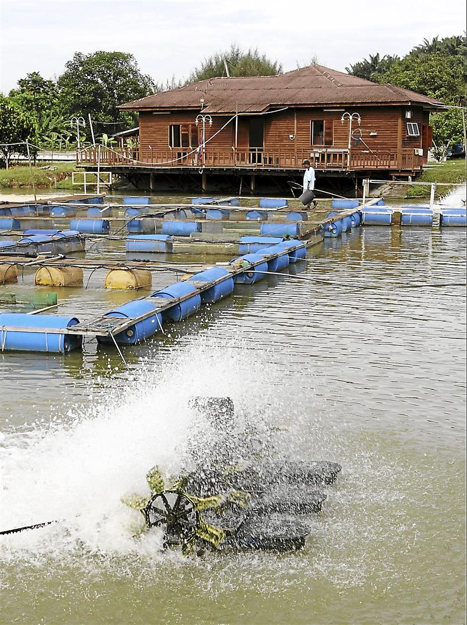 Company ventures into aquaculture to deliver fish direct to