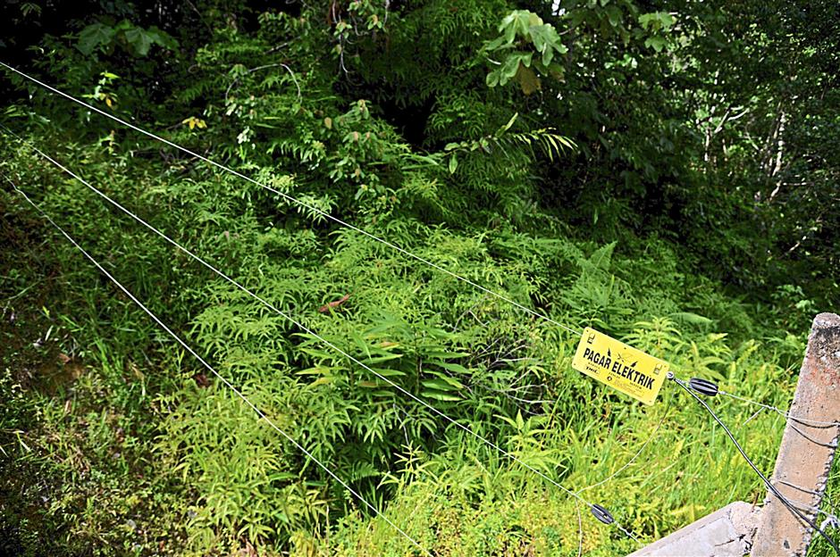 Electric fencing stretching 11km on either side of the Aring-Tasik Kenyir road helps direct animals to a safe passage beneath the viaduct and away from the road where they risk being knocked down by vehicles. - KEVIN TAN/The Star