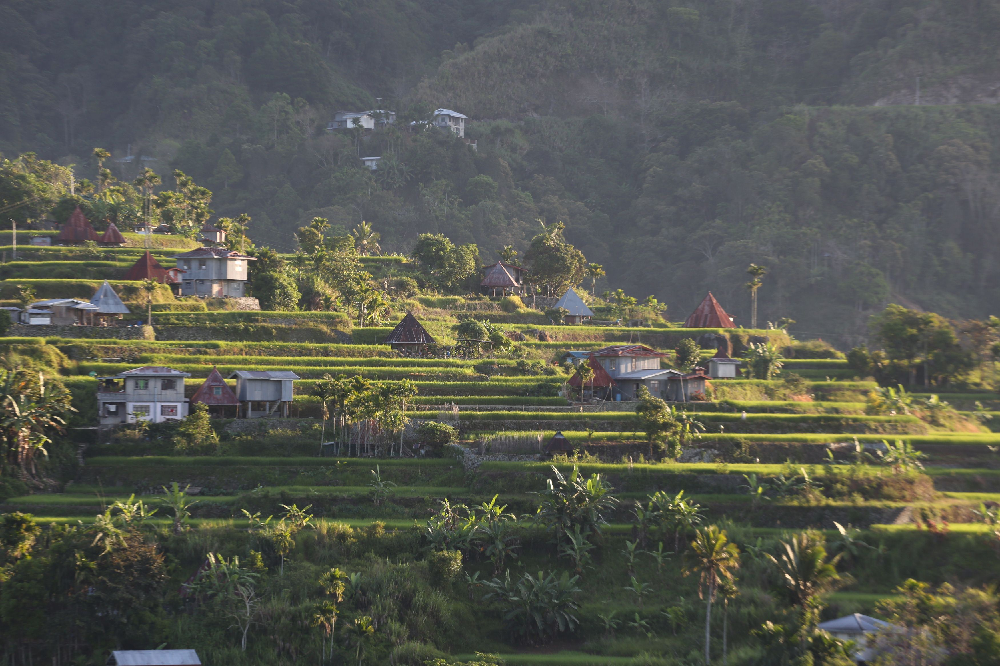 Philippines' famed rice terraces face modern threats | The