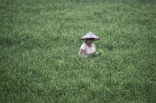 China, voracious buyer of foreign agricultural land   The