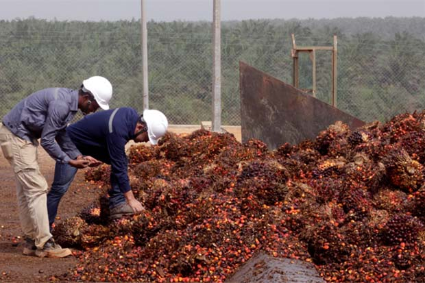 Malaysian palm oil/Vegoils: Market factors to watch Tuesday