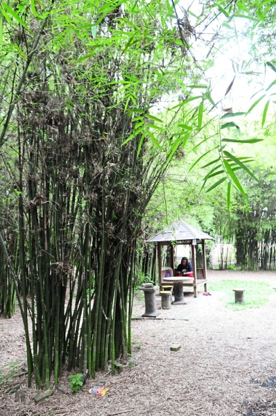 The bamboo grove at Banghuris Homestay in Kampung Hulu Chuchoh offering a cool place for a short break but do not forget mosquito repellent.