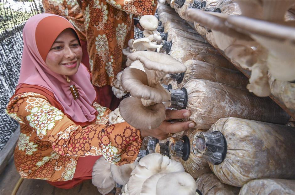 When mushroom dreams come true | The Star Online
