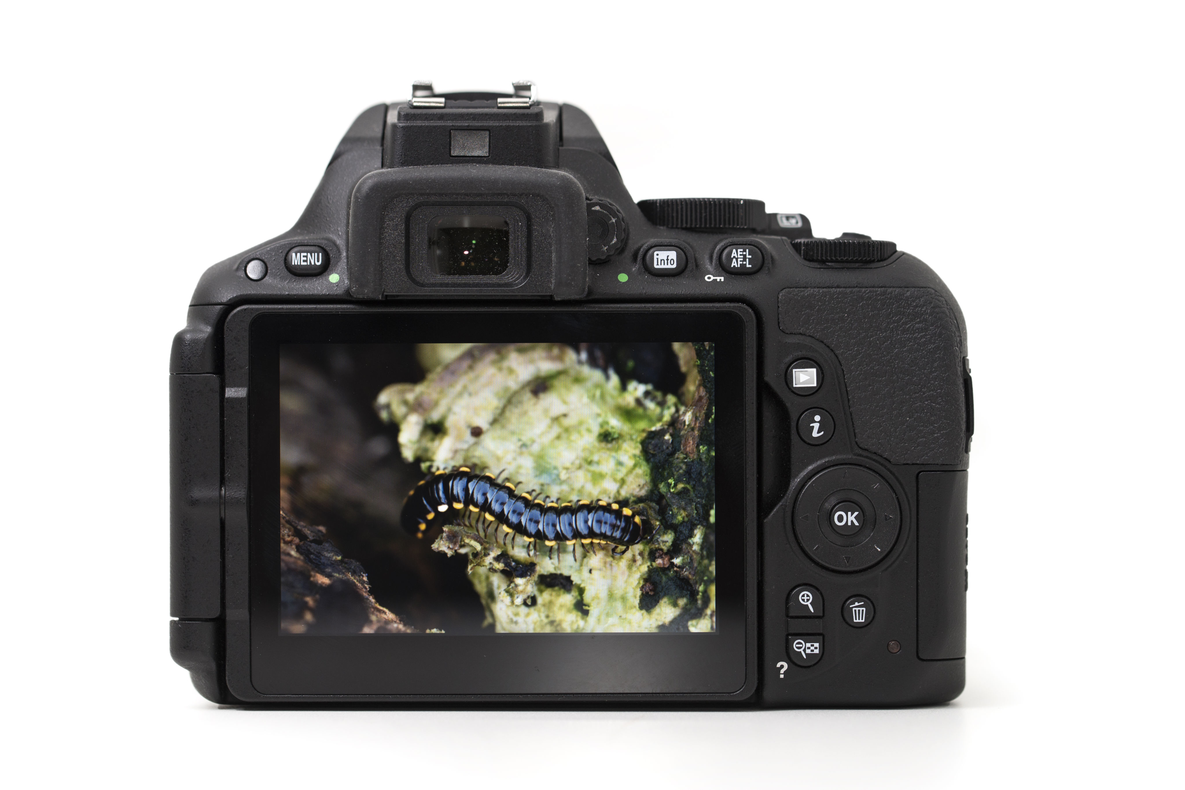 Controls: despite the shrinking of the body size over the D5300, the D5500 control layout remains largely the same