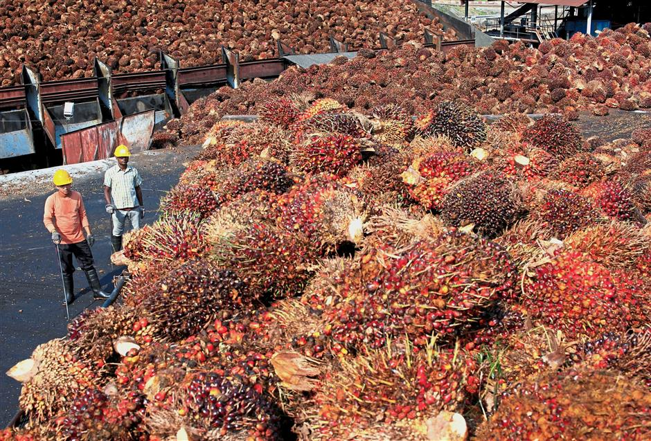 All sound and fury: Although threats of retaliatory measures against Norway and France have been announced and supported by the Palm Oil Industry Forum, so far, there has been thunder but no rain. — Reuters